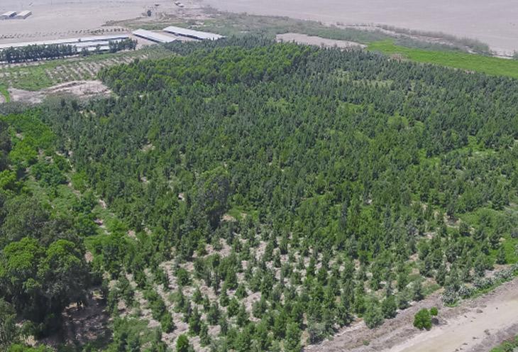 Bosque Educativo Municipal del Norte, Ancón